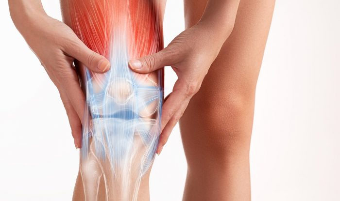 Joints and Muscles – Understanding its Importance and the Health Concerns It Brings